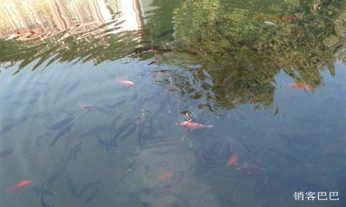 鱼塘理论 怎样挖掘出一个高效的鱼塘