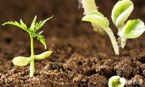 空手套白狼经典案例,生物肥料公司如何零成本开拓市场
